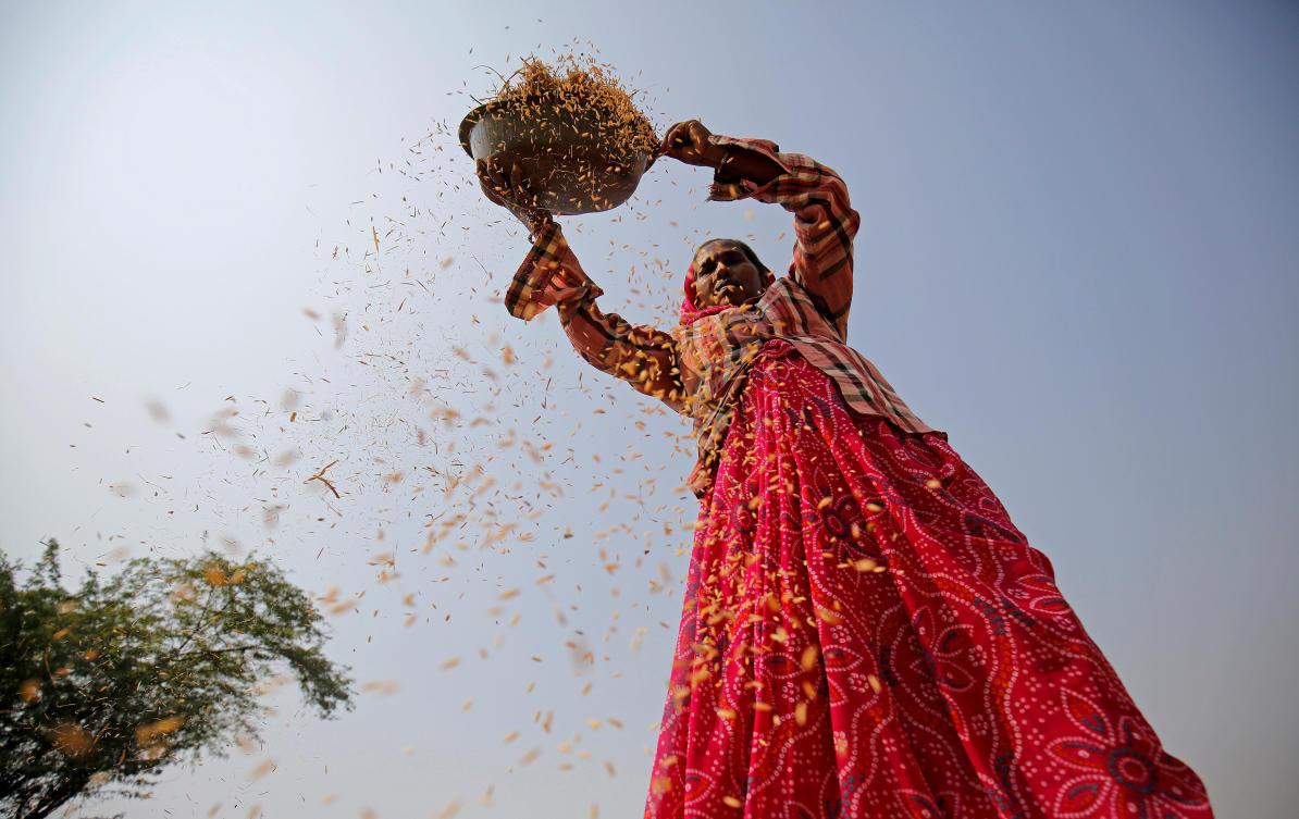 India's rice exports forecast to hit record 12 3 million