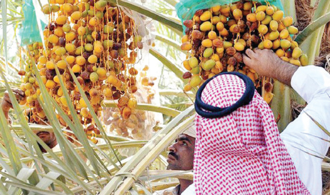 Dates, the staple of every Ramadan table in Saudi Arabia